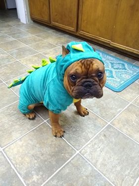Porkchop loving his new Halloween costume!