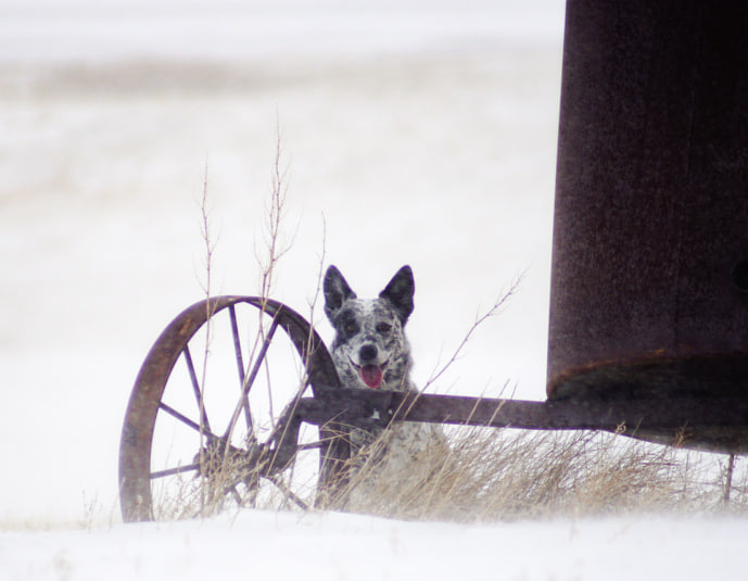 PBJ & Happy Dogs CBD Picture in the snow with dog and waggon wheel