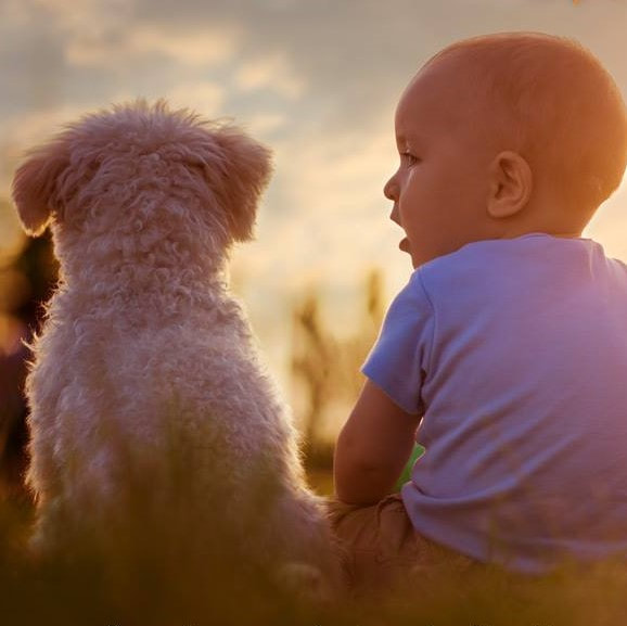 Baby and dog. Happy Dogs CBD pbjdogs.com
